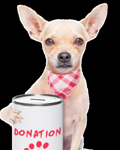 perrito-donacion